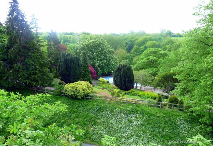 elevated view of trees, wooden fence and paddling pool